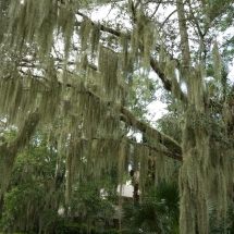 Moss-Trees-in-Charleston